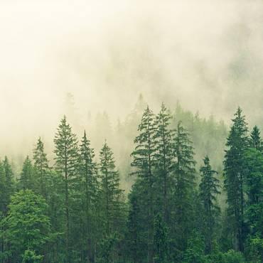 Wald [(c) Bild von jplenio auf Pixabay]