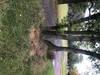 tn_fa63f4f4064df23e7dab115d58743f76.jpg